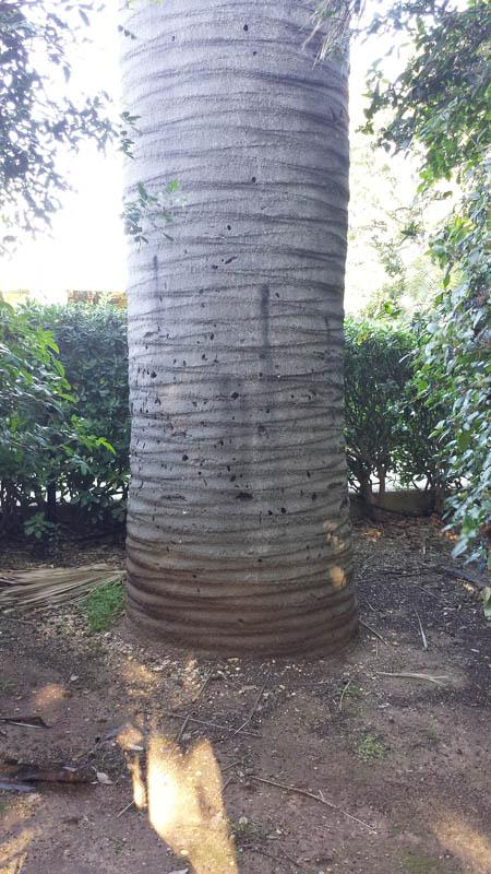 palma-villa-excelsa-3